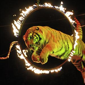 Цирки Лыткарино