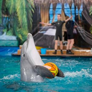 Дельфинарии, океанариумы Лыткарино