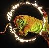 Цирки в Лыткарино