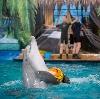Дельфинарии, океанариумы в Лыткарино